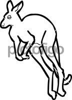 KangarooFreehand Image