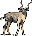 Kudu freehand drawings