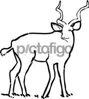 KuduFreehand Image