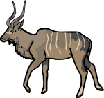 Kudu freehand drawings