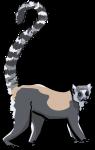 Lemur freehand drawings