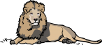 Lion freehand drawings