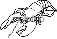LobsterFreehand Image