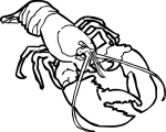 Lobster freehand drawings