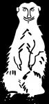 Meerkat freehand drawings