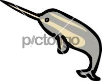 NarwhalFreehand Image