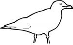 Iceland Gull freehand drawings