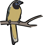 Inca Jay freehand drawings