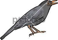 Indian BlackbirdFreehand Image