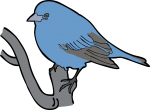 Indigo Bunting freehand drawings