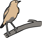 Isabelline Wheatear freehand drawings