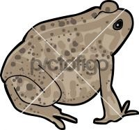 ToadFreehand Image