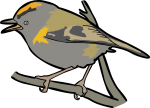 Madeira Firecrest freehand drawings