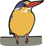 Variable Dwarf Kingfisher freehand drawings