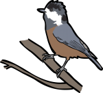 Varied Tit freehand drawings