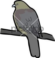 Wedge Tailed Green PigeonFreehand Image