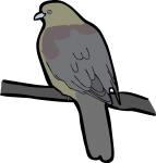 Wedge Tailed Green Pigeon freehand drawings
