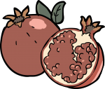 Pomegranate freehand drawings
