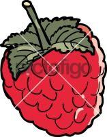 RaspberryFreehand Image
