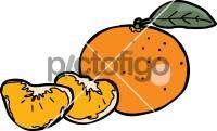 TangerineFreehand Image