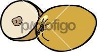 Ziziphus mauritianaFreehand Image