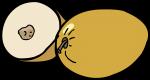 Ziziphus mauritiana freehand drawings