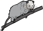 Opossum freehand drawings