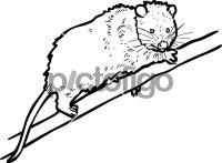 OpossumFreehand Image