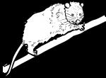 Opossum freehand drawings