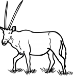Oryx freehand drawings