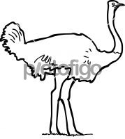 OstrichFreehand Image