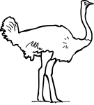Ostrich freehand drawings