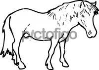 PonyFreehand Image
