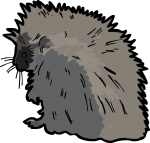 Porcupine freehand drawings