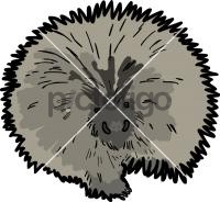 PorcupineFreehand Image