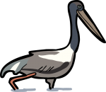 Jabiru freehand drawings