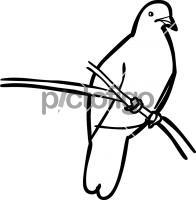 Hand drawn icon from Pictofigo for jambu fruit dove