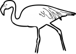 Jamess Flamingo freehand drawings