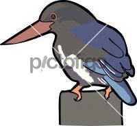 Javan KingfisherFreehand Image