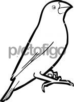 Java SparrowFreehand Image