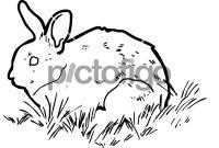 RabbitFreehand Image