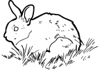 Rabbit freehand drawings