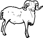 Ram freehand drawings
