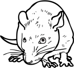 Rat freehand drawings