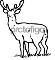 Red DeerFreehand Image