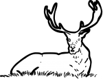 Red Deer freehand drawings