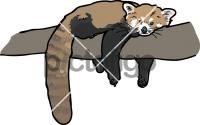 Red PandaFreehand Image
