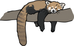 Red Panda freehand drawings