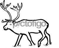 Reindeer CaribouFreehand Image
