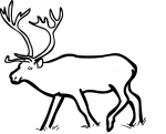 Reindeer Caribou freehand drawings